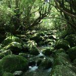 屋久島旅行を計画中 – 心身を浄化し自然のリズムを取り戻す旅